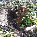На Житомирщині замість фруктів на території саду знайшли артилерійський снаряд. ФОТО