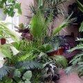 Цветы, которые привлекут в ваш дом счастье и процветание