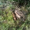 У Хорошівському районі діти шукали металобрухт, а викопали боєприпаси