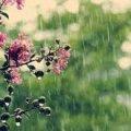 Погода в Житомирі на вихідних