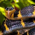 У селі Радовель Житомирської області чоловіка вкусила змія