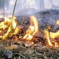 На Житомирщині 21 серпня очікується висока пожежна небезпека