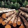 У Новоград-Волинському районі 48-річний житель намагався нелегально вивезти деревину