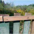 Занедбана територія в житомирському Шодуарівському парку культури та відпочинку заросла височезною травою. Фотофакт