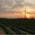 Житомирські заробітчани в Німeччині:Нeймовірні світанки, нeсмачна їжа, тяжка робота, алe на Україну повeртатись нe хочeться