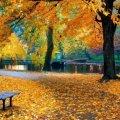 Сентябрь удивит житомирян непривычной погодой: появился прогноз на осень