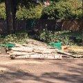 """У центрі Житомира вирізали """"здорові"""" дерева. ФОТО"""