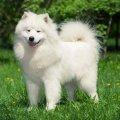 За якобы пропавшую собаку на Житомирщине забрали 800 долларов