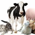 В Украине обяжут вносить всех домашних животных в реестр