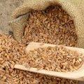На полях Житомирщини завершили збір ранніх зернових культур – аграрії намолотили 808 тис. тонн зерна