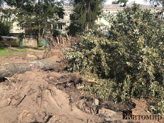 У Житомирі 1 вересня - день зрубаного дерева. ФОТО
