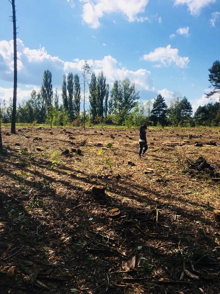 На Житомирщині безжально вирубують ліси