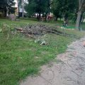 У Житомирі на площі Польовій дерева зрізали, а сміття з гіллям не прибрали. ФОТО