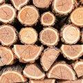 На Житомирщині відбудеться аукціон з продажу деревини
