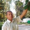 Знали ли вы, что ученые Житомирского Национального агроэкологического университета научились бороться с каштановой молью
