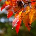 Погода на тиждень у Житомирі: спекотно та без опадів