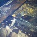 У Житомирі вогнеборці ліквідували пожежу на даху приватної оселі