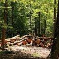 """ТОВ """"СІЛІ-КОР"""" протягом трьох років знищує ліс та незаконно видобуває надра на землях Харитонівської селищної ради!"""