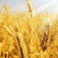 Агропідприємства Житомирської області можуть отримати до 400 тис. грн на розвиток власної справи