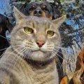 В Житомирі відбудеться марш за права тварин