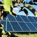 На Житомирщині сонячна електростанція забезпечила б 20 житлових будинків