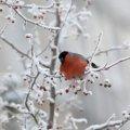 Зима в Україні в цьому році буде найтеплішою і дощовою