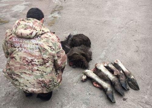 """Рештки Червонокнижного """"Лося Європейського"""" виявлені на Житомирщині"""