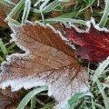 В Житомирській області очікуються заморозки