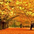 МУЗІКА. Іво Бобул. А вже осінь...