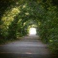 На Житомирщині є свій тунель закоханих