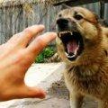 На Житомирщині диких тварин вакцинують проти сказу
