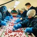 """Житомирська """"Українська ягода"""" цінується на міжнародних ринках"""