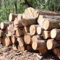 На Житомирщині затримали вантажівку з деревиною невідомого походження