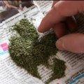Собака допоміг знайти наркотичну речовину в приватному будинку 28-річного жителя Овруцького району