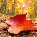 Завтра, 17 октября, в Украине сохранится тепло