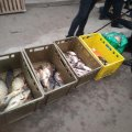 Робота Житомирського рибоохоронного патруля за тиждень - результати