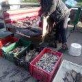 Мешканець Любарського району продавав рибу без відповідних документів