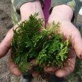 Лісівники на Житомирщині садять ліс