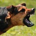 Скажений собака на Житомирщині напав на господаря
