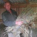 Лісгосп Житомирської області заготував на зиму 7 т вівса для підгодівлі тварин