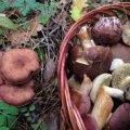 На Житомирщині жінка пішла по гриби, а найшла труп