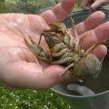 Рибоохоронний патруль нагадує правила ловіння раків на Житомирщині