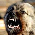 В селі на Житомирщині оголосили карантин через хворого на сказ домашнього пса