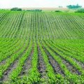 На Житомирщині завершили посів озимих зернових культур