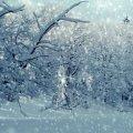 Житомирську область накриє мокрим снігом