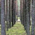 На Житомирщині у Поліському заповіднику хочуть створити біосферний резерват