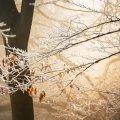 19 ноября: какой сегодня праздник и что нельзя делать