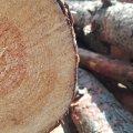 Вантажівку із підозрілою деревиною виявили патрульні поліцейські на Житомирщині
