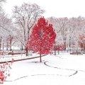 Сегодня днем, 21 ноября, снег пройдет на западе страны
