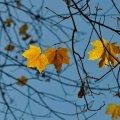 Сегодня днем, 22 ноября, в Украине от 2 тепла до 4 градусов мороза